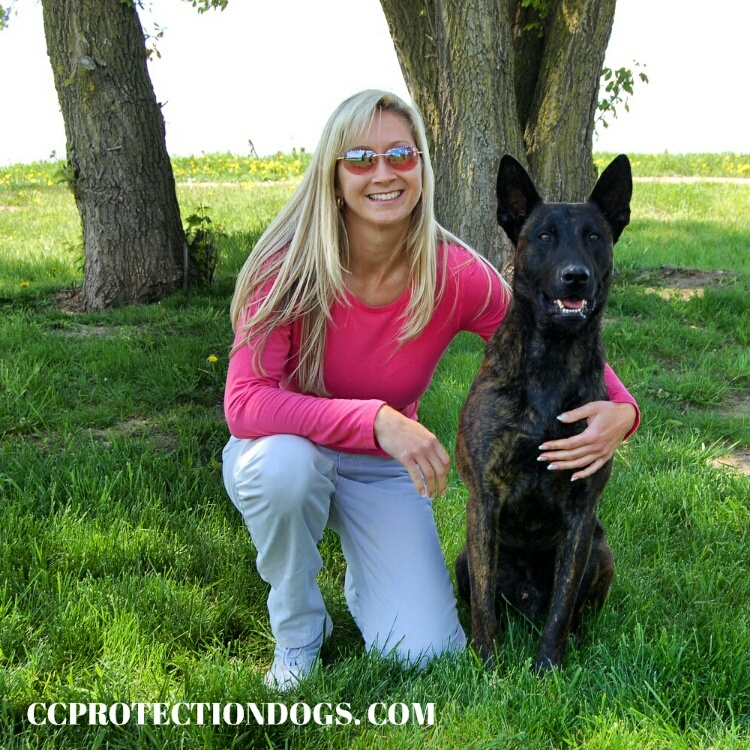 Dutch Shepherd , Protection Dogs, By CCPD