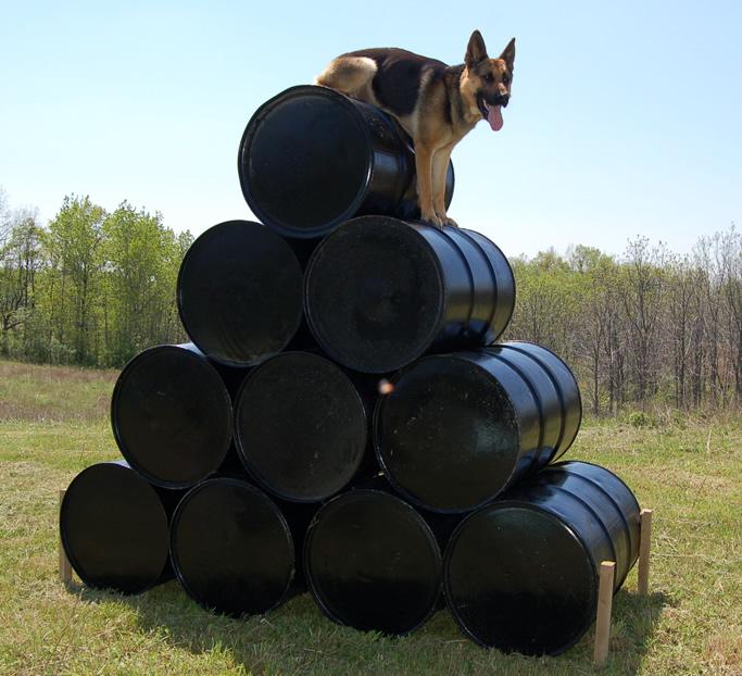 Customized Protection Dog Training
