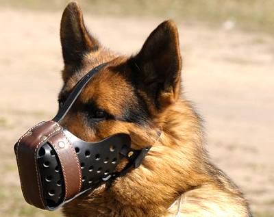 Muzzle work, German Shepherd Dog