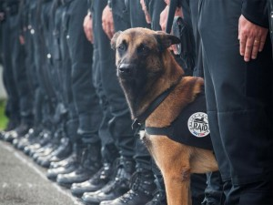 diesel-paris-attacks_ Protection Dogs