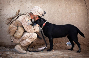 CC Protection Dogs, workingservice dogs