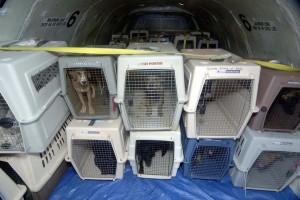 CC Protection Dogs and Pet On-Flight Boarding